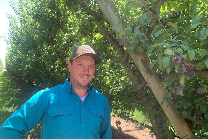 A smiling man in a bright blue shirt and cap standing in an orchard.