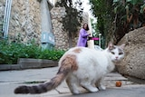 A white and grey cat looks back over its shoulder at the camera, as a woman puts out food for it on a footpath