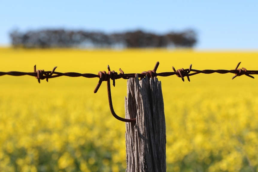 SA is banning the growing of genetically modified crops until 2025.