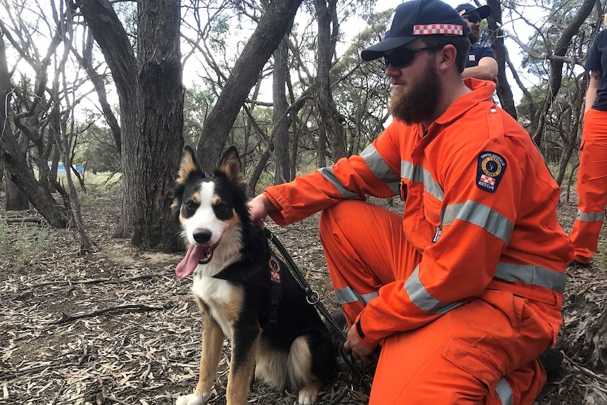 An Australian Shepherd wearing an SES harness and lead sits with his owner