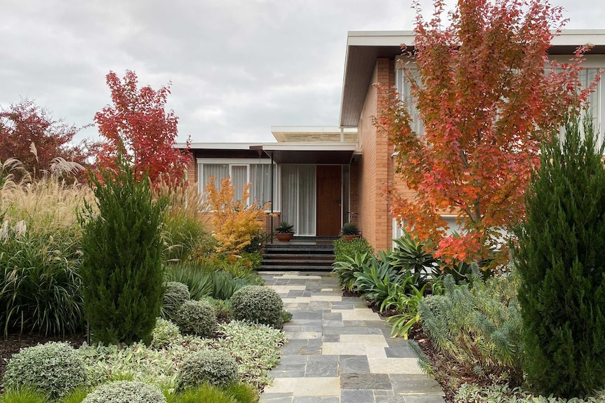 A grey paved pathway leads to the front door of a brick mid-century home, surrounded by plants.
