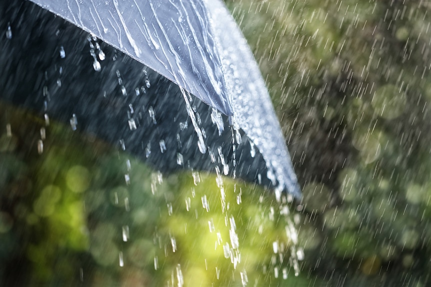 Close-up of rain falling on umbrella with greenery in background.