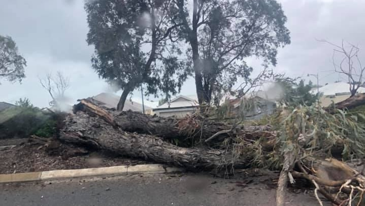 A tree has fallen across a road, rain spatters the lens of the camera.