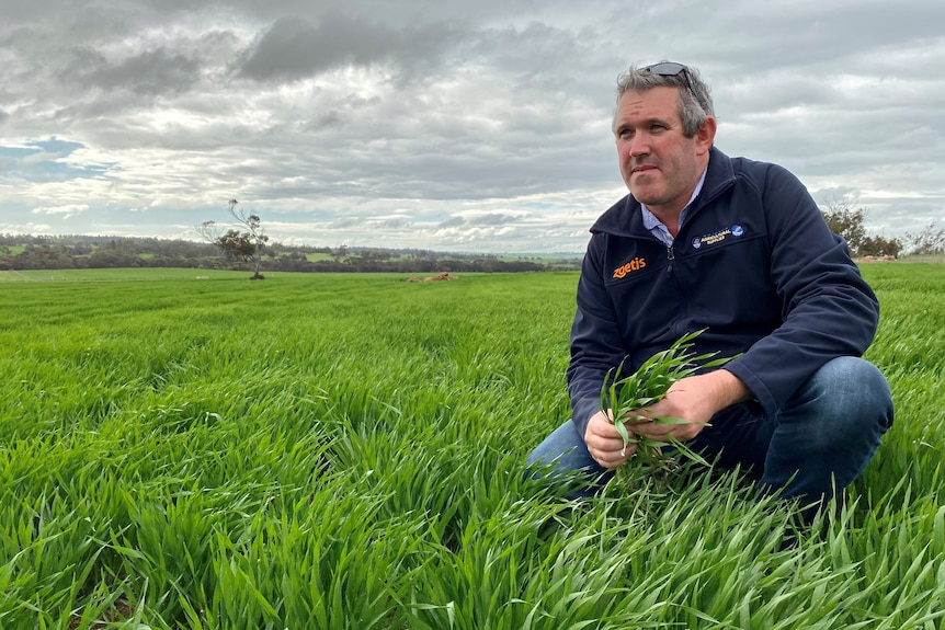 A middle-aged man crouches down in a field of green crop