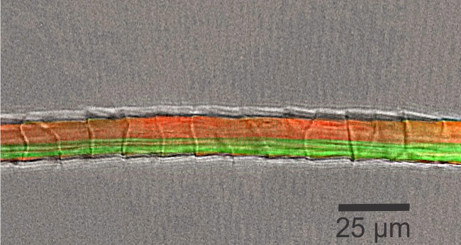 Compile of microscopic images of sheep wool