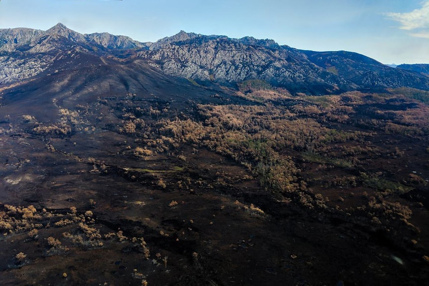 Burnt landscape in Tasmanian wilderness