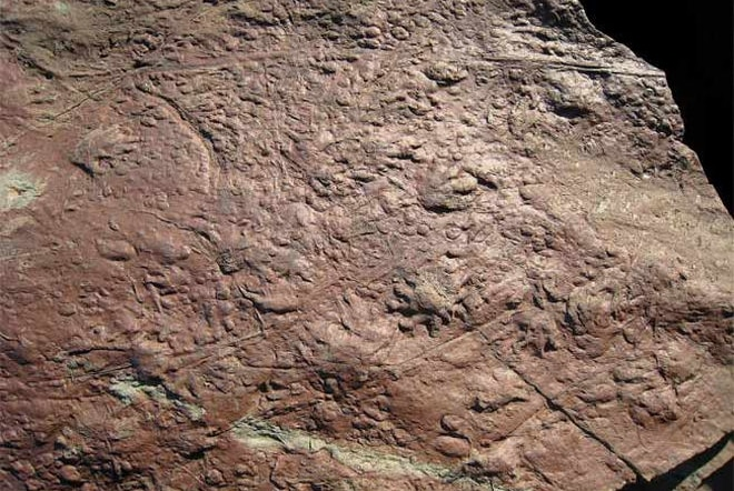 Oldest known fossil of reptile prints