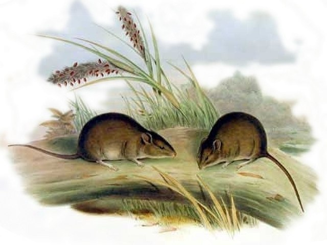 Illustration of two mice