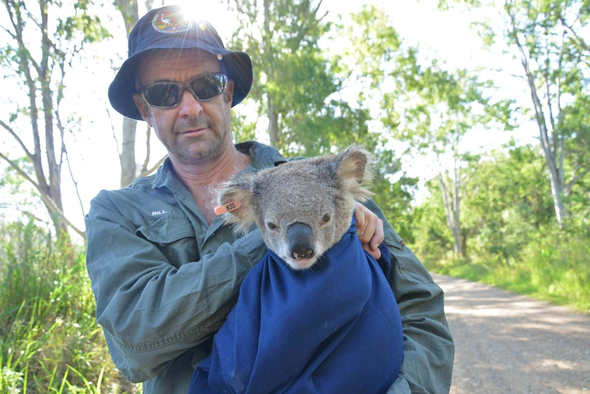A man in khaki shirt and bucket hat holds a koala wrapped in a blanket with a tagged ear, by a roadside in a forest.