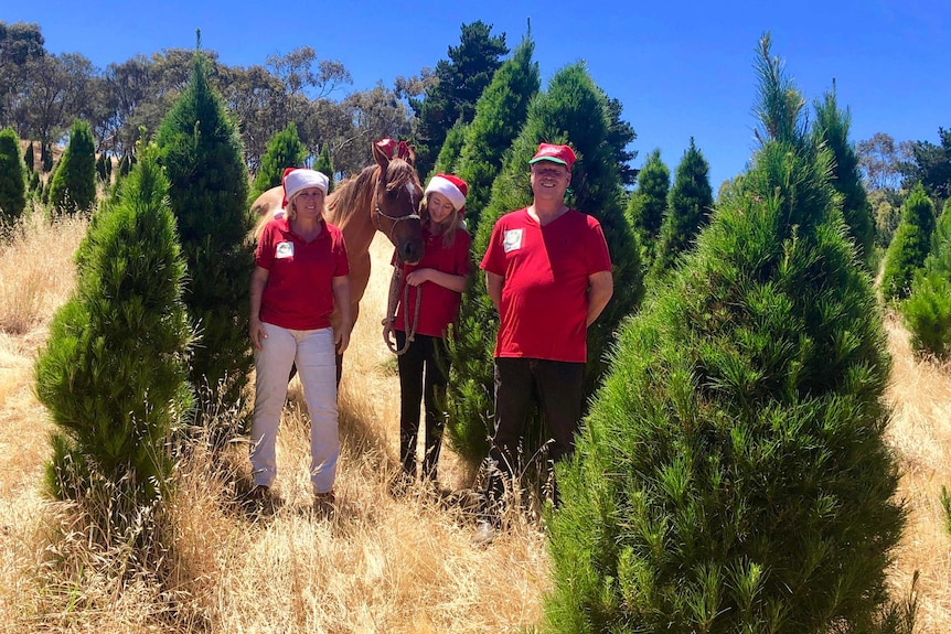 Two adults and a teenager stand amongst their Christmas tree plantation with their horse dressed in Santa outfits