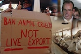 Collage of images from the live export ban in 2011