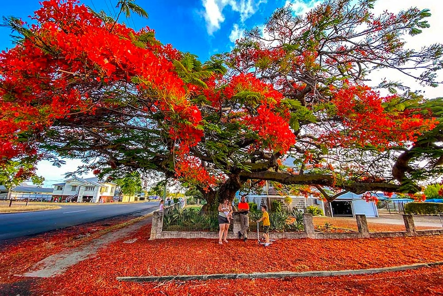 A family stand under a tree filled with red blossom.