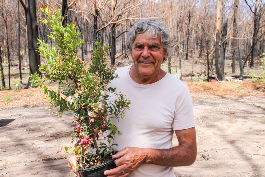 Noel Butler stands on his burnt property holding a small bush ready for planting.