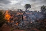 A smouldering fire near Warburton, WA.