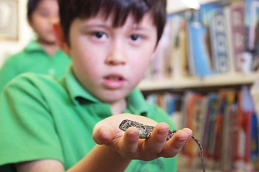 A child from Bonython Primary School holds earless dragon.