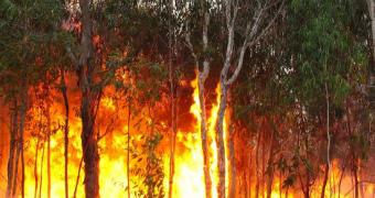 Bushfires: pic for teaser box