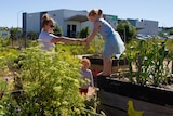 A mother and two children play among garden beds.