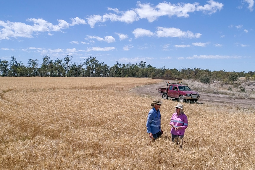 Zena and Gary Ronnfeldt stand in a golden wheat crop in late 2020 at Kupunn, near Dalby, Queensland.