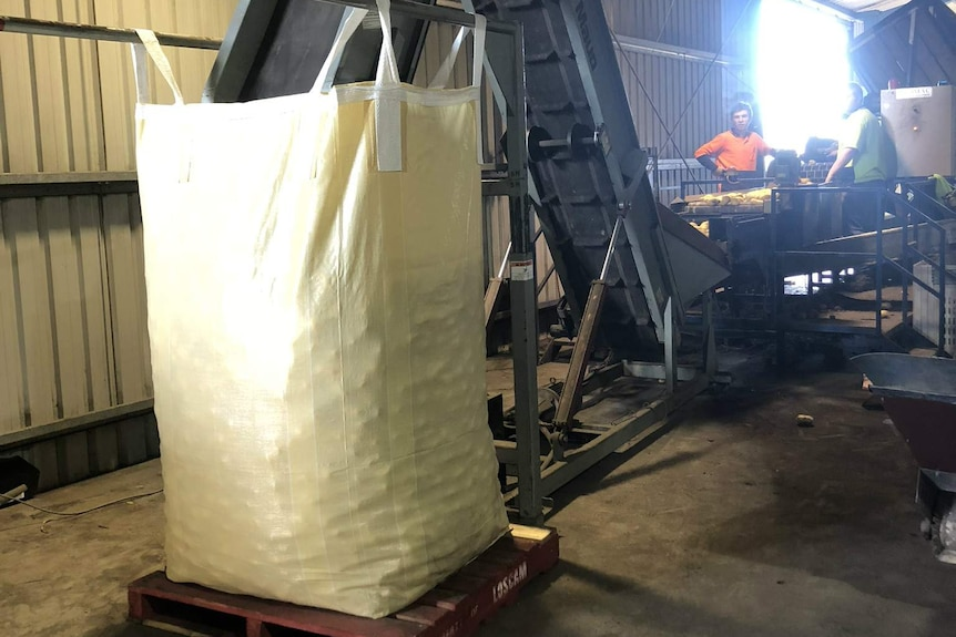Filling a bag of potatoes in Marion Bay destined for Dubbo