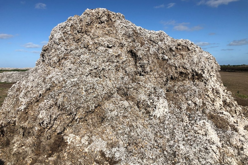 A mound of brown and white fluffy material.