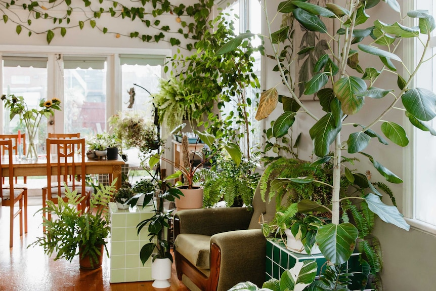 The interior of a Melbourne home with a wide variety of indoor plants, with a cacti greenhouse in the garden.