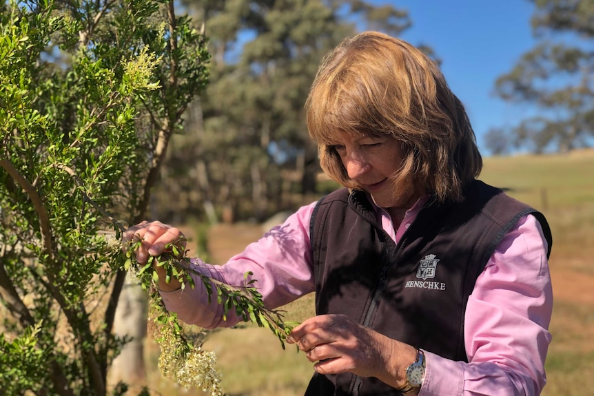 A woman inspects a branch on a tree.