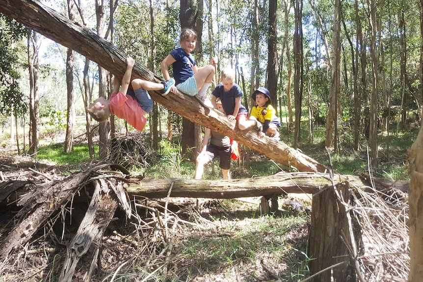 Children playing in a tree.