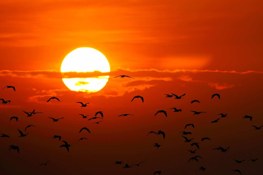 A setting sun with birds silhouetted in front of it.