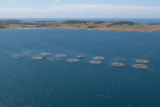 A helicopter shot of a kingfish farm in a bay with hills in background.