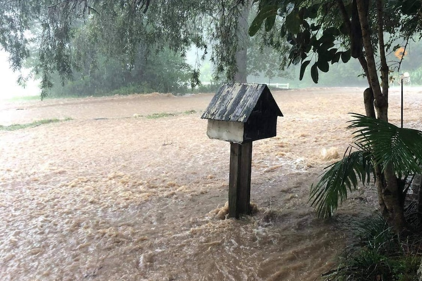 Floodwater rushes past a mailbox.