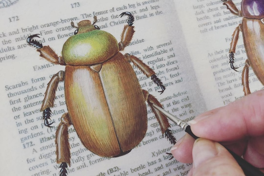 A woman paints a christmas beetle onto the page of an old botanical journal.
