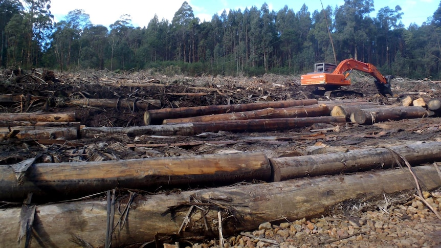 The Upper House has been told the forestry  deal will have a catastrophic effect on Tasmania.