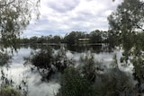 The Murray River in flood
