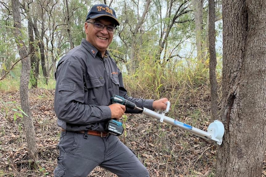 Professor Victor Galea treating an invasive tree species with a drill and herbicide capsule