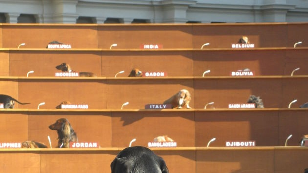 A Dachshund dog stands at the 'United Nations' podium in Melbourne
