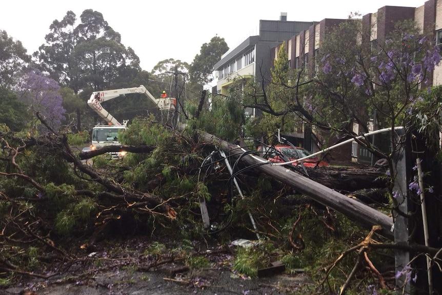 电线杆和大树倒在路上