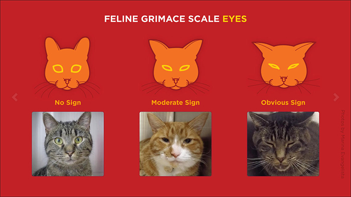 Three cats showing different eye expressions.