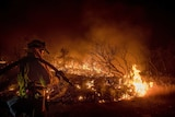 Firefighter Kern Kunst battles a fire in California. Shrubs in front of Kunst are on fire, he has a hose slung over his shoulder