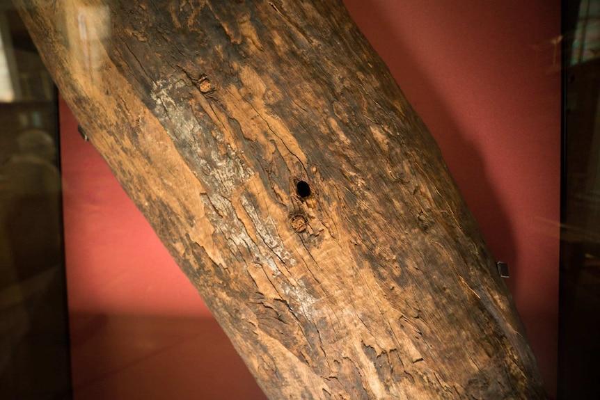 A hole in the Gweagal Shield.