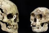 Modern human and 'hobbit' skull