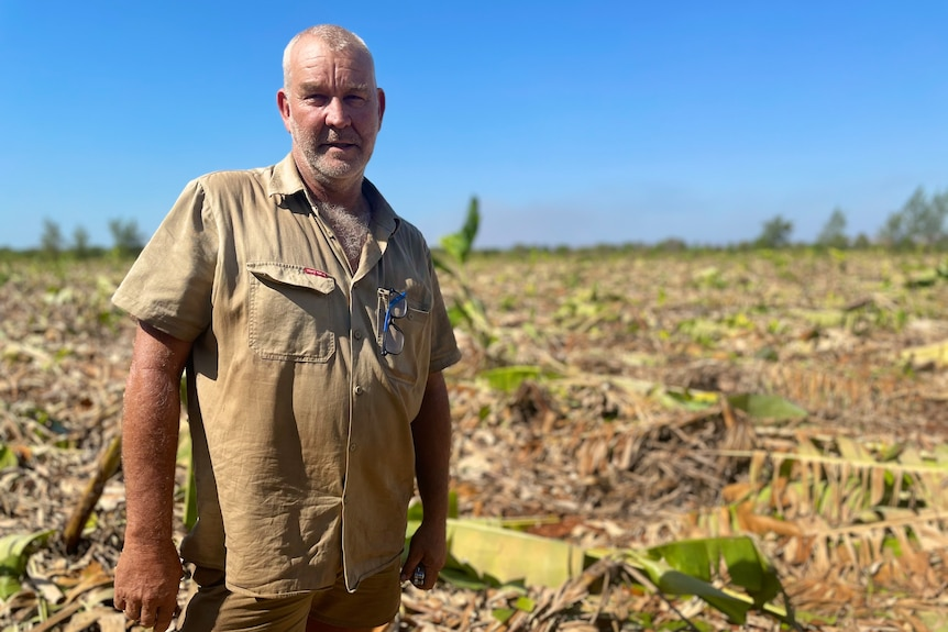 A middle aged male farmer in front of knocked down banana plants